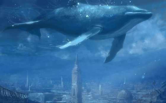 blue, кит,