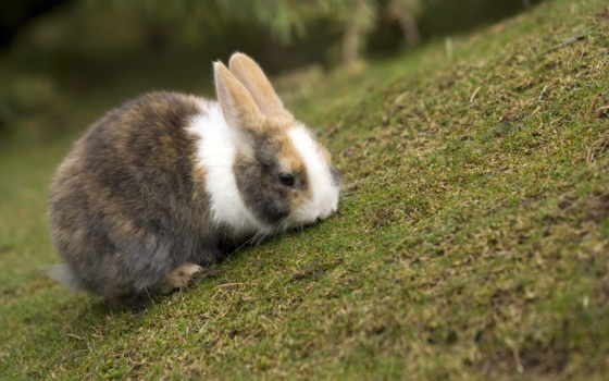 krolik, кролик, кролики