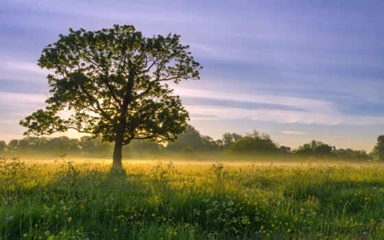 природа, desktop, дерево