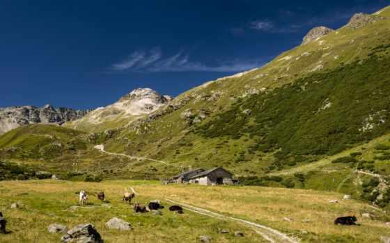 природа, альпы, постройки, горы, landscape, дома, zhivotnye, коровы, ultrahd,