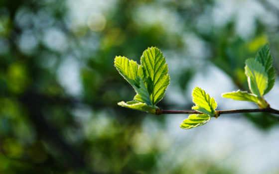 сочная, макро, весна, красивая, зелёная, молодая, pinterest, листва,