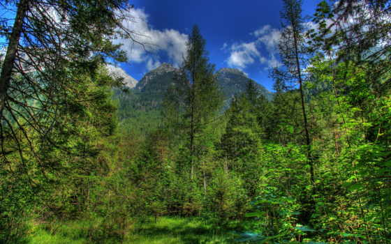 hdri, природа, hdr, desktop, бавария, german, trees, леса,