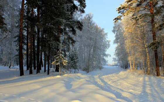 winter, снег, деревья Фон № 79646 разрешение 2048x1532