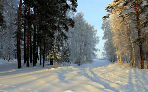 winter, снег, деревья