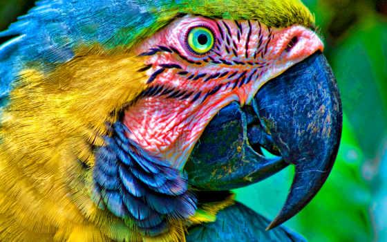 попугай, марта, графика, попугая, ara, macaw,