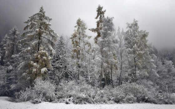 природа, winter, лес