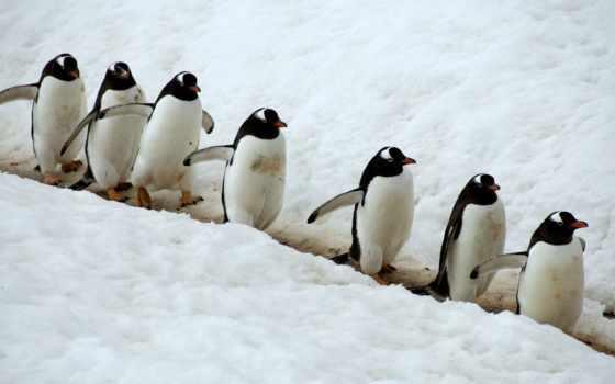 penguins, пингвины, они, meme, пингвин, создать, cute, formatı, align,