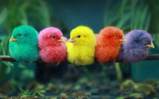 chicks, всем, birds, фотографий, подборка, утренняя, новая, colorful, colored,