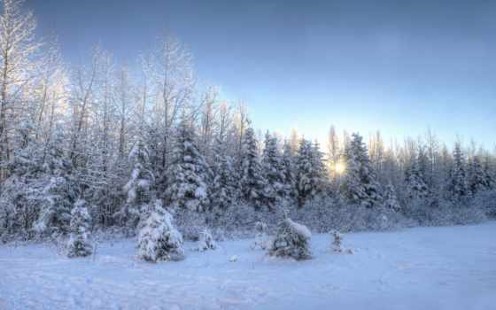 winter, снег, trees, desktop, закат, густой, mac,