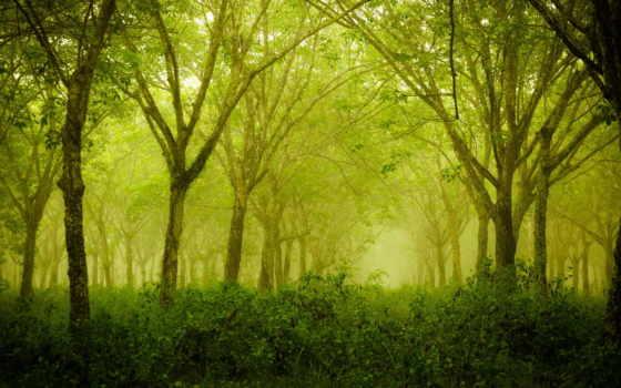 лес, деревья Фон № 32246 разрешение 1920x1080