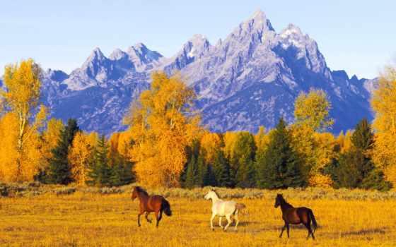 осень, горы, horse