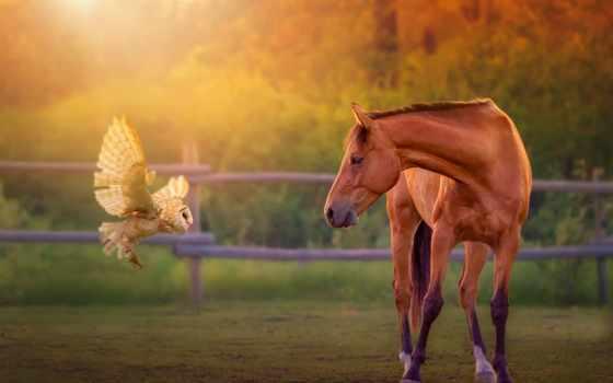 лошадь, семья, дек,