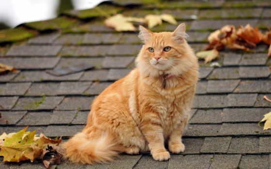 кот, крыше, марта