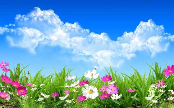 поле, цветочное, name