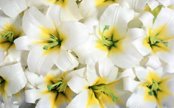 марта, цвети, flowers