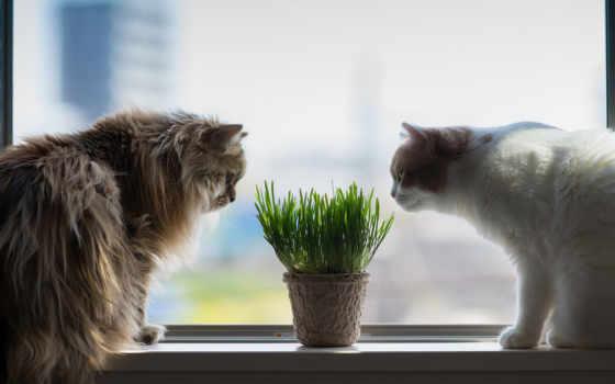 cats, окно, desktop