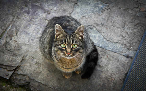 кот, кошки, взгляд, more, кошек, see,