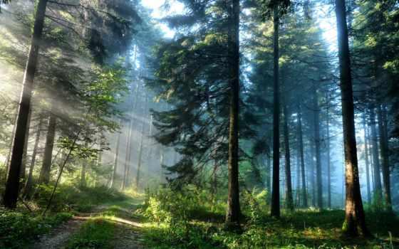 природа, лес, природы