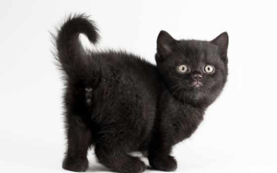 fondos, negro, blanco, pantalla, gato, fondo, imágenes, хмельницкий, gatitos, animales,