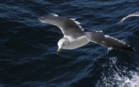 albatross, ан, они