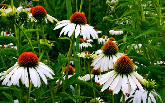 качество, цветы, down, resolution, cvety, смотреть
