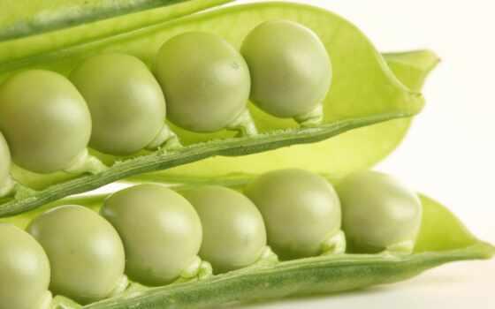 pea, white, fondo, punch, sucker, сладкое, зелёный, mobile, еда, watercolor