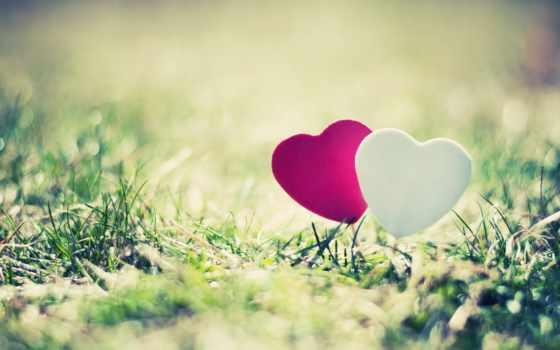 сердечки в траве