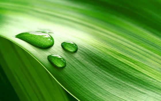 природа, листья, капли