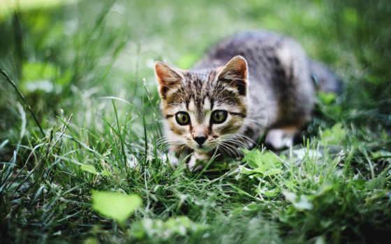 красивые, summer, темы, самы, разделе, данном, подойдут, трава, кот, заставки,