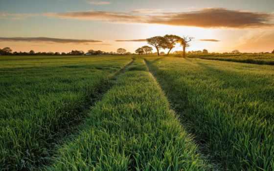 поле, rising, природа, утро, трава, солнца, луг, травка, небо, oblaka, summer,