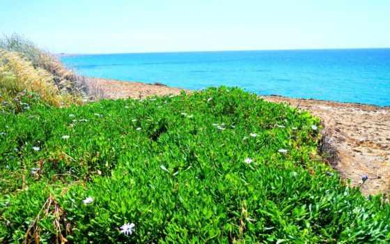 растения, кіпру, дата, кипр, природа, hovrashok, fotohomka, рослини,