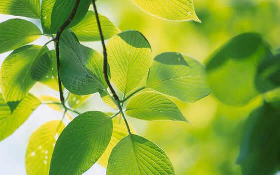 зелёный, листва, natural, тверской, площадь, окно