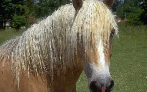 лошадь, лошади