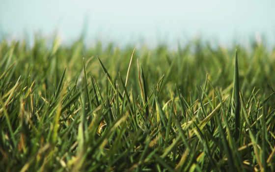 сухая зелёная трава