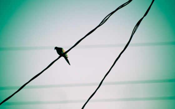 were, you, птица