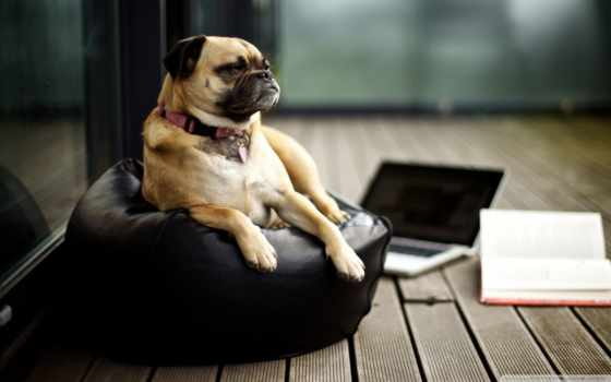 zhivotnye, собаки, фоны, заставки, living, world, собака, обоях,