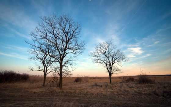 fondos, rboles, paisaje, pantalla, fondo, cielo, primavera, otoño, gratis, лес, категория,