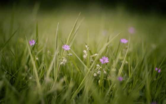 макро, природа, cvety, растения, трава, зелёный, summer,
