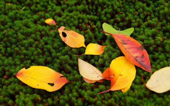 страница, full, search, desktop, растения, осень, фон,