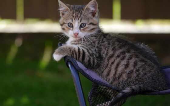 кот, smartphone, aggressive, pinterest, cats, кошки, дня, група, удачного,