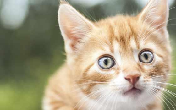 кот, animals, animal, white, котенок, cats, high, lion, king, majestic,