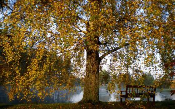 природа, water, ванная, осень, небо, filter, аквариум, animal, vilnius, дерево