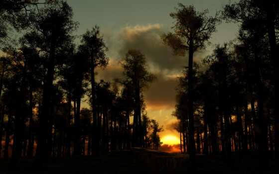 лес, вечер, закат, природа, trees, sun, облако, дерево