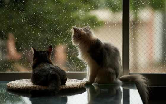 погода, rainy, ozhidatsya, температура, ukraine, air, warm, give, дождь, ночь