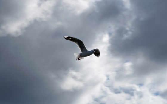 bird, сайта, сборник, контакты, компании, save, image, download, фотографии,