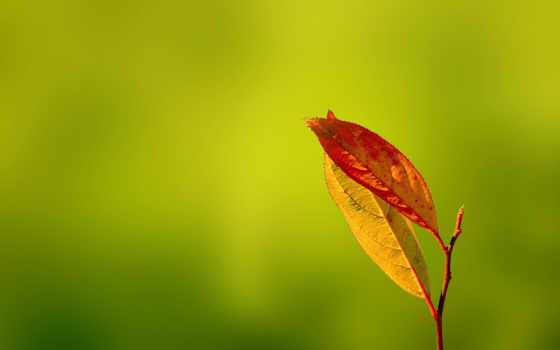 осень, desire