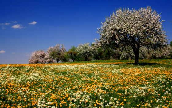 цветы луговые, лето