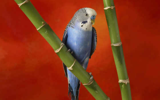 птицы, zhivotnye, попугаи, картинка, николаев,