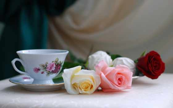 роза, розами, застывшая, фотонатюрморты, розы, натюрморт, пурпурном, скорик, цветы, вас, стих,