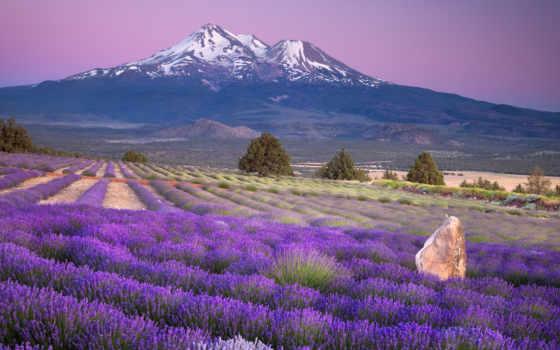 margin, лавандовые, прованса, french, lavender, крыму, полей, прованс, лавандовых, метки, франции,